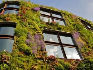 вертикальные сады.
